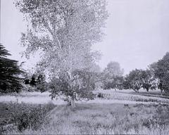 Te Whenua/The Land