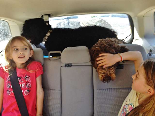 going to the beach with the Brennemans