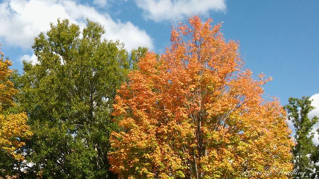 Autumn color, 2017