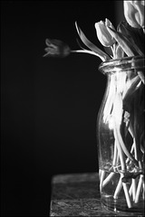 Stillleben von U. | Fotokurs