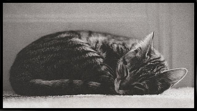 Atti Cat