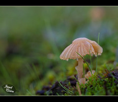 159/366: Little Mushroom Umbrella