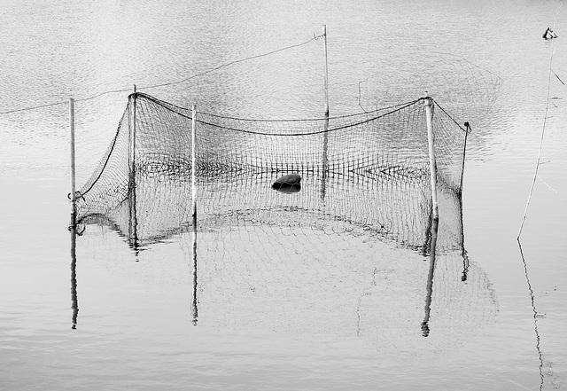 HFF....Fisch-Tennis-Zaun-Netz? :)