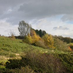 Autumn colours seen from the Dudley No.2 Canal at Blackbrook Junction