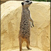 Zoo de Fitilieu (38) 17 juillet 2020.