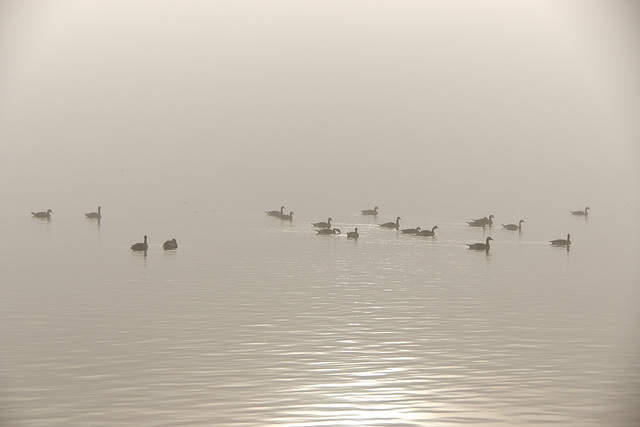 tranquility in the fog