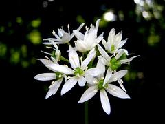 2 (18)..austria flower power