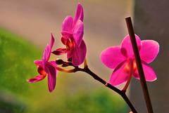 3 (12)...orchide