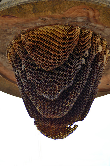 Genuss für Leib und Seele - Honigwaben