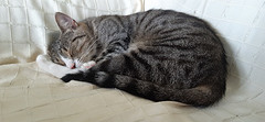 Kiki schläft ...
