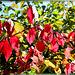 Bunte Herbstfarben. ©UdoSm