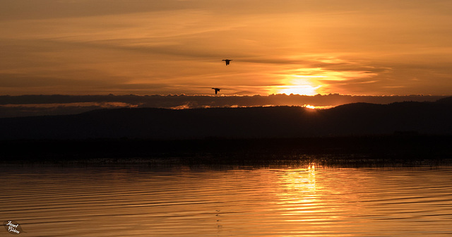 Pictures for Pam, Day 172: Sunrise on Upper Klamath Lake