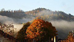 Der Nebel steigt auf ~ ~ ~