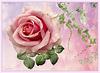 Rosa con hiedras