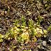 20200408 7090CPw [D~MI] Großes Torfmoor, Hille