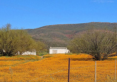 Namaqualand spring flowers in the Biedouw valley