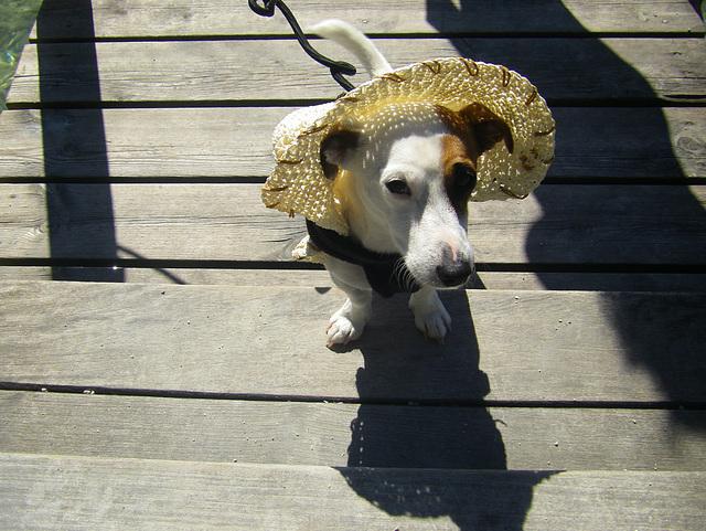 Un chien en été