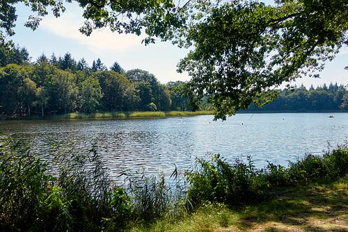 Bredenbeker Teich -see-01368-co-28-08-16