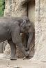 Tarak arbeitet III (Zoo Heidelberg)