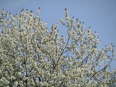Blütenpracht und Himmelsblau