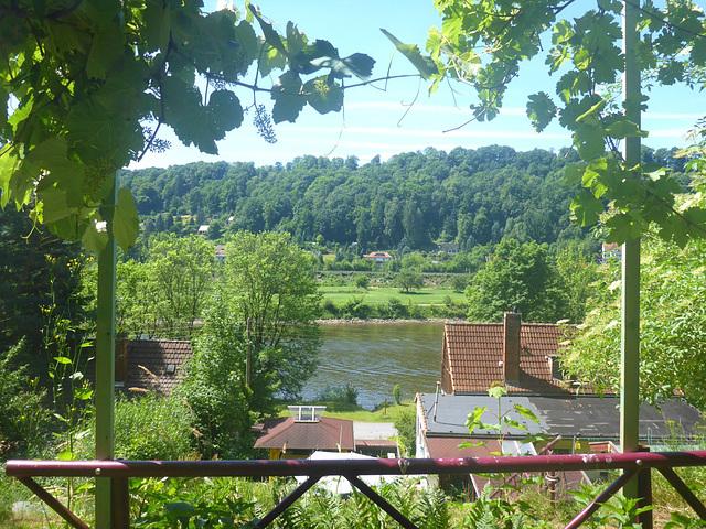 Sommermorgen im Elbtal - somermateno en Elbvalo