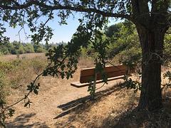 Under an Oak Tree
