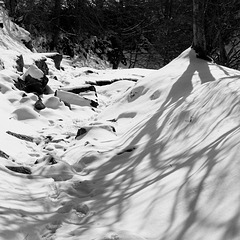 IMG 7747 snow