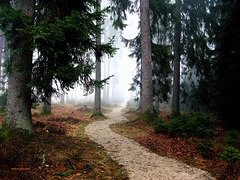 Path to...