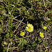 20200408 7097CPw [D~MI] Großes Torfmoor, Hille