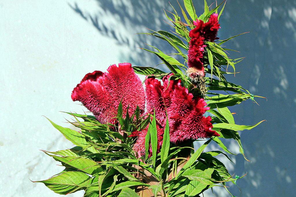 fleur nouveau 21