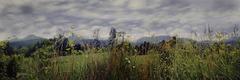 veiled mountains