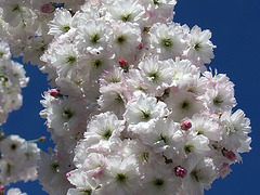 Floranta arbo