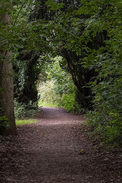 Dibbinsdale nature reservea