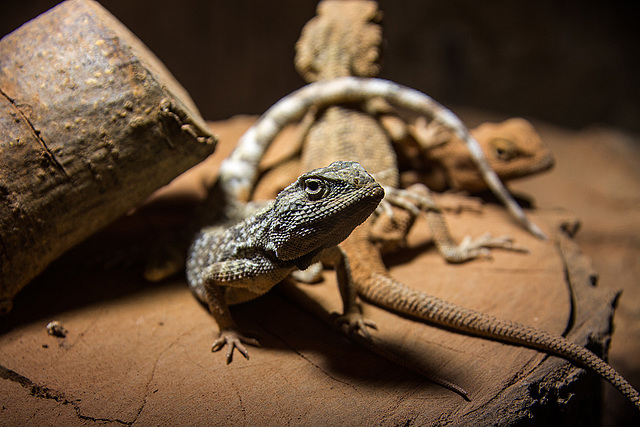 20150911 8828VRAw [D~HF] Tierpark, Herford