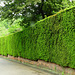 Fence Taxus Baccata