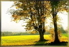 Herbstliches Allgäu. ©UdoSm