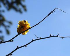 winter pollination
