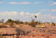 Central Australia....Birdsville Track