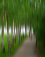 Birken im Garten der Liebermannvilla