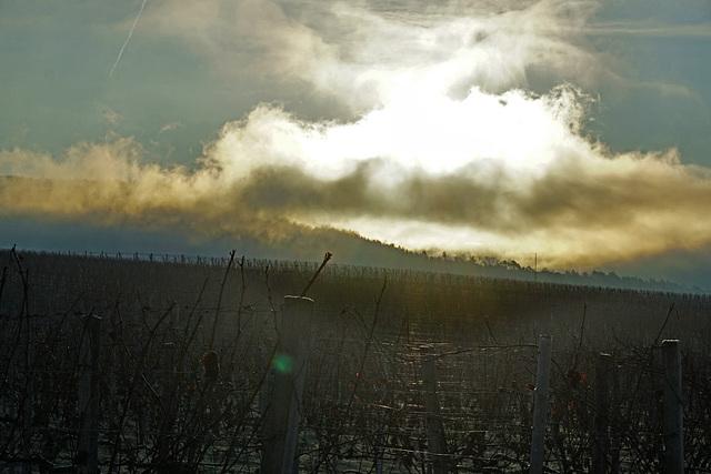Sonnenaufgang im Weinberg - Sunrise in the vineyard