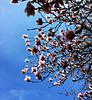 Spring firmament