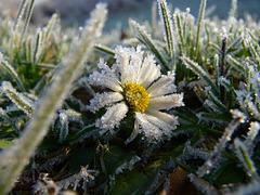 frosty beauty