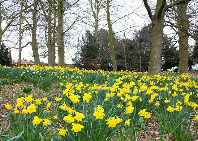 Spring time at Oxborough