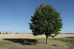 Un arbre, un banc, what else ?