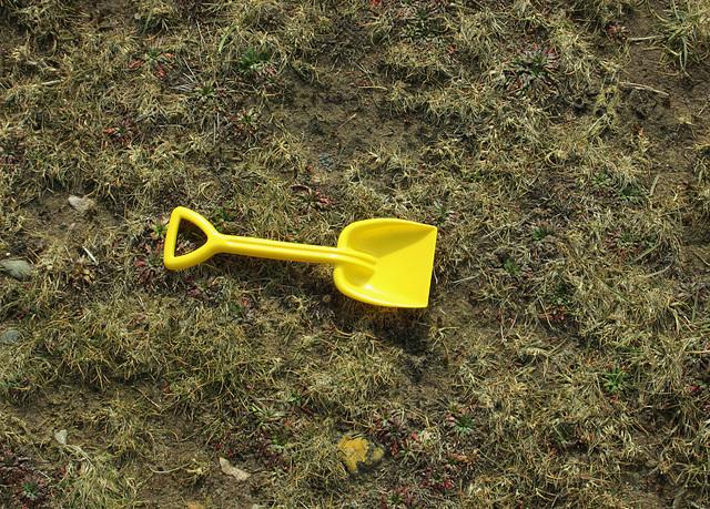 Yellow spade.