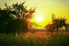 Abendstimmung in einer Streuobstwiese - Evening atmosphere in a meadow orchard