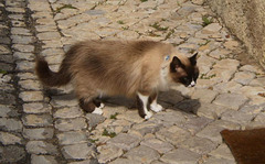 Indoor and outdoor cat.