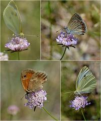 Papillons du 14 Juillet !