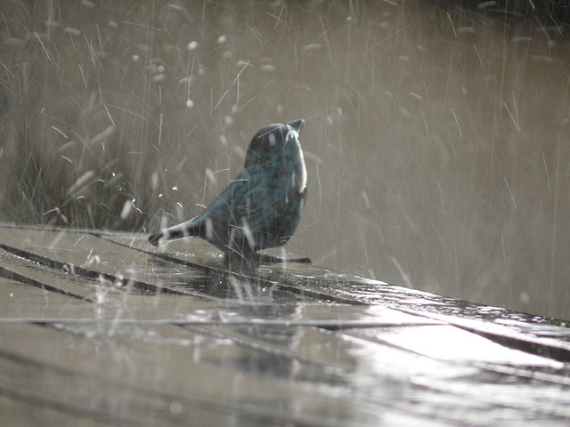 I´m singing in the rain.....