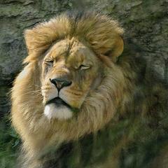 Kuschel-Löwe